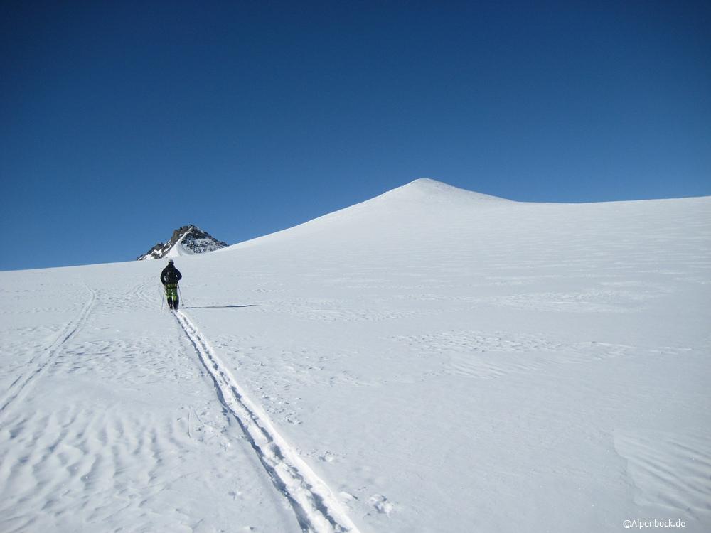 taschachwand alpenbock