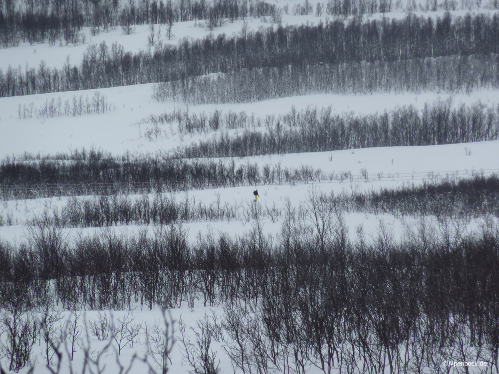 ullstinden lyngen alpenbock