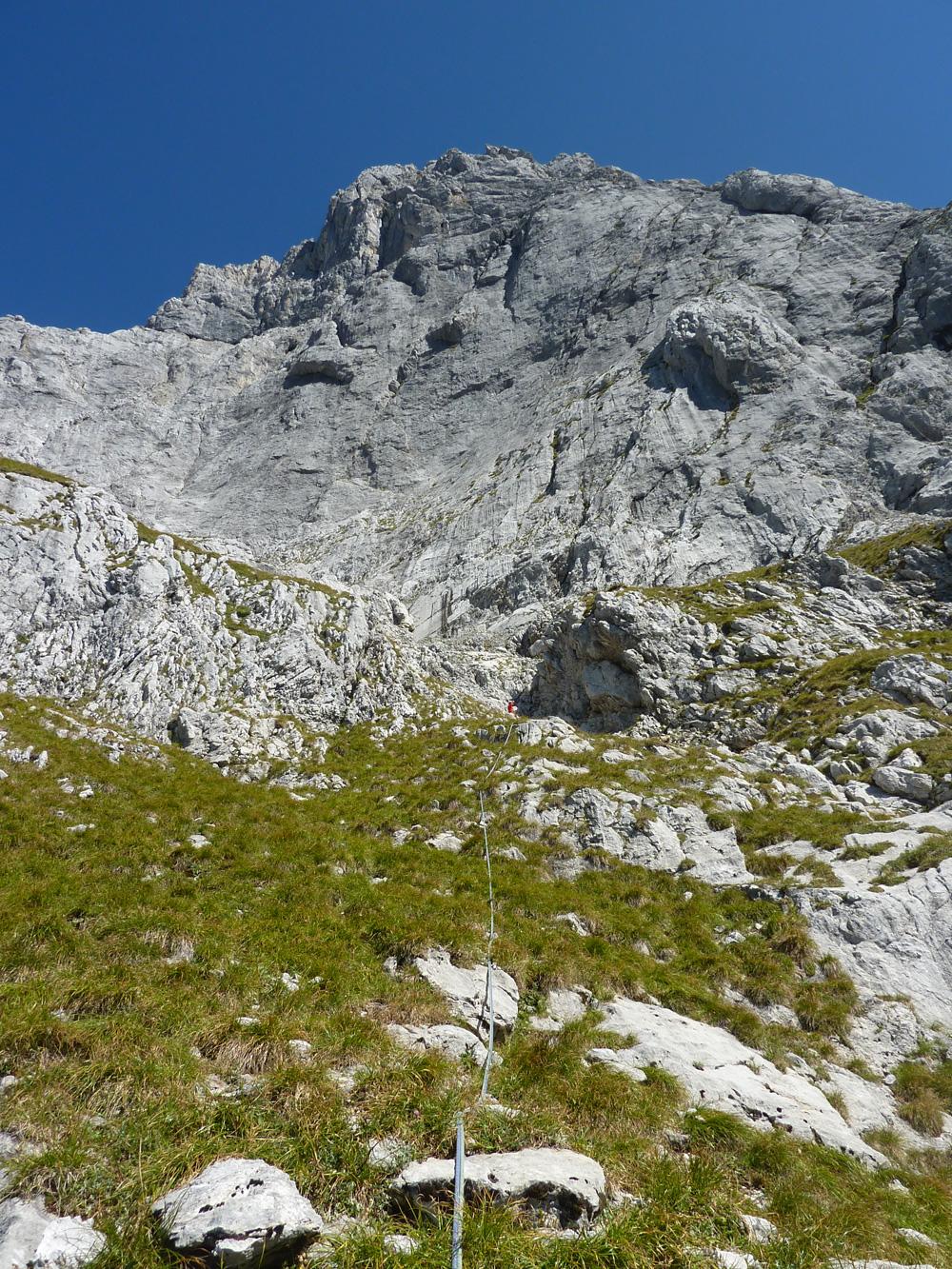 hazo alpenbock