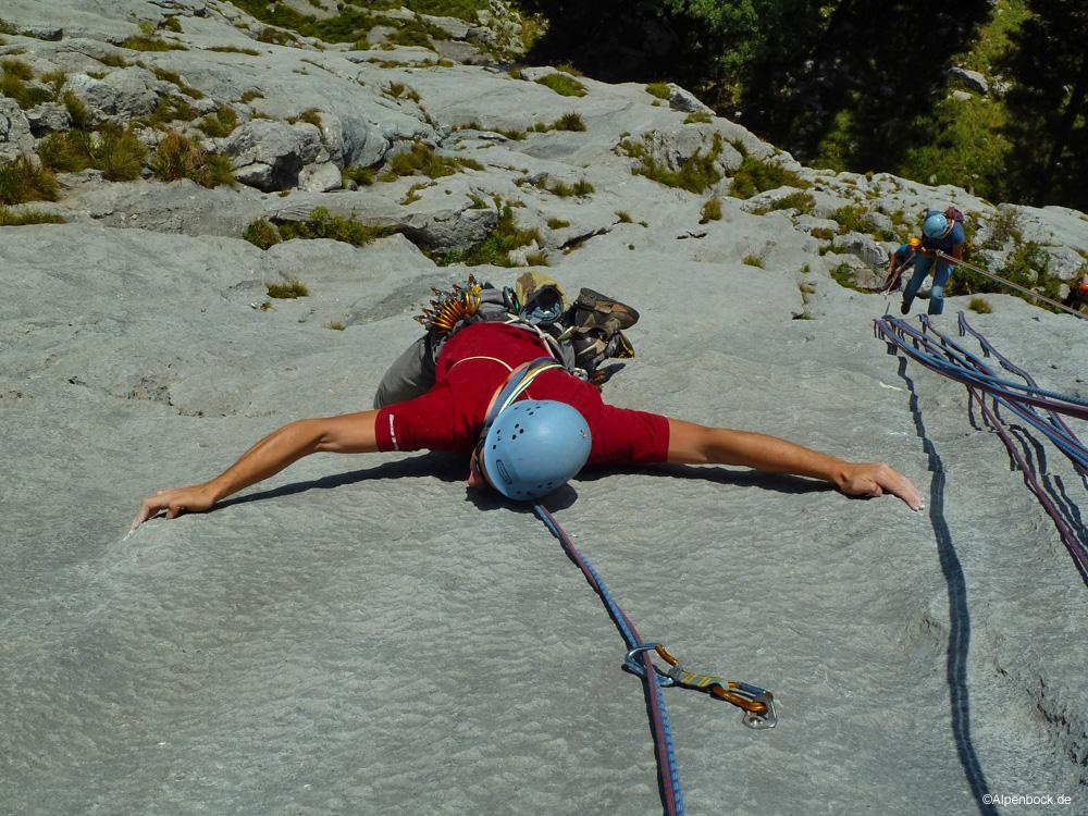 urlkopf alpenbock