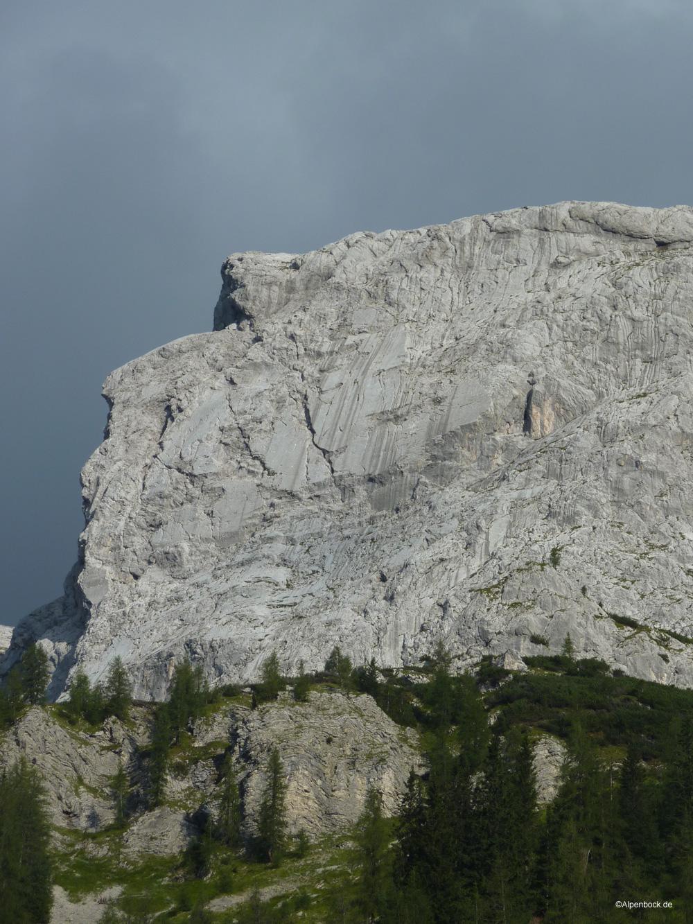 riffeltorkopf alpenbock